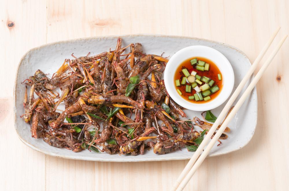 Assiette d'insectes comestibles cuisinés