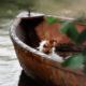 Un petit chien naviguant dans une barque