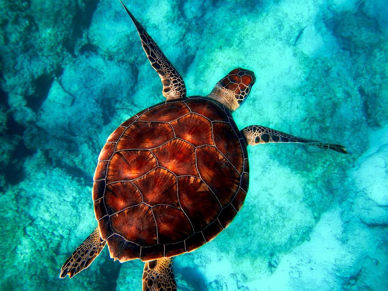 Tortue vue en plongée sous-marine aux Canaries